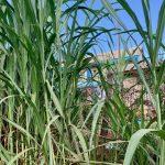 foto van het gras vanuit koe-perspectief. JAWA kan je tussen de grassprieten herkennen.